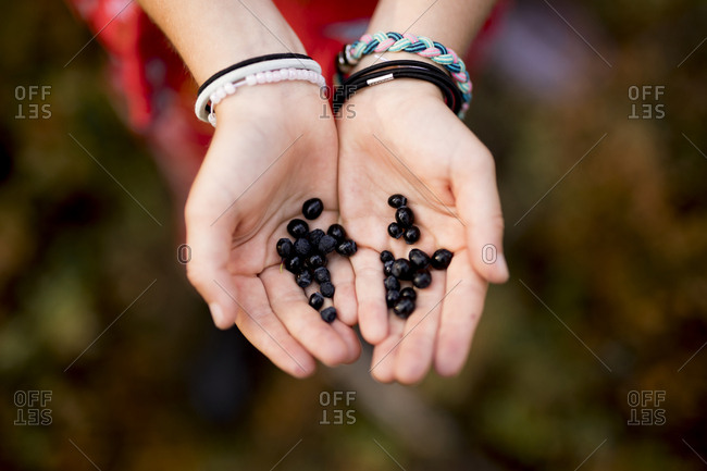 Blueberries on hands