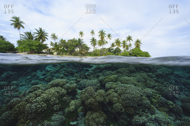 Reef in tropical water, Bora Bora, French Polynesia,Bora Bora, Bora Bora, French Polynesia
