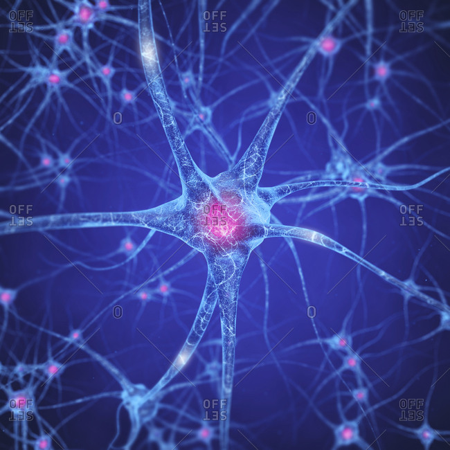 Nerve cells, illustration. Neural network concept.