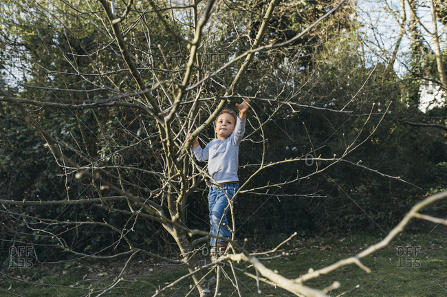 Young boy climbs a small tree in park