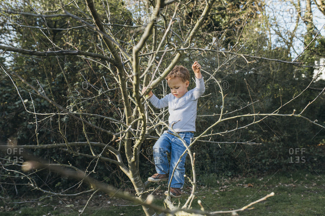 Young boy climbing a small tree in park