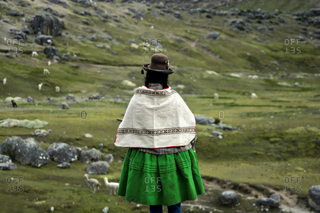 Rear view of an Aymara woman overlooking green pasture with alpacas
