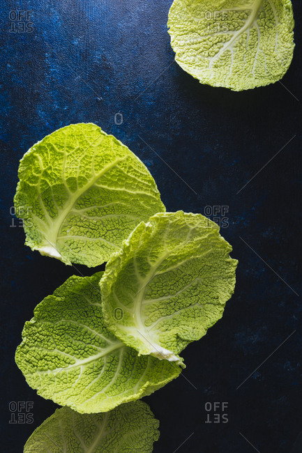 still life of cabbage leaves