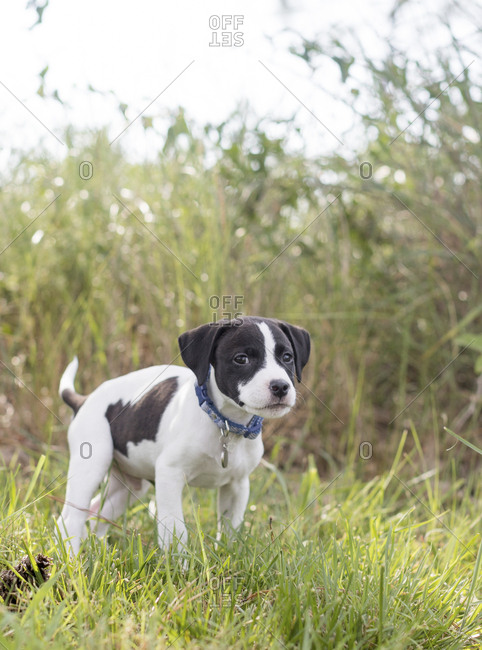Puppy with floppy ears in grass