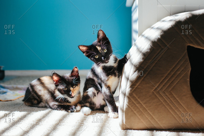 Two kittens next to each other one standing and one laying