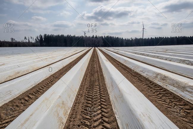 Asparagus field on the Bavarian countryside