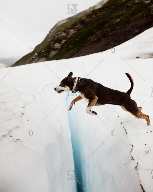 Brave dog jumps across a glacier ice crack in Alaska