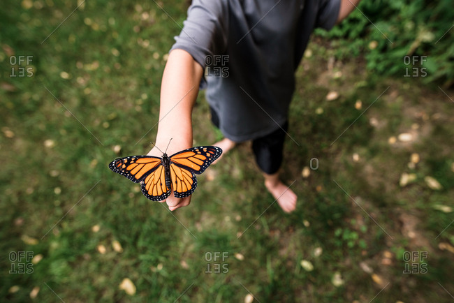 Overhead shot of butterfly on boy's hand with wings open