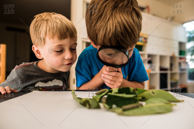 Two boys examining caterpillars with a magnifying glass