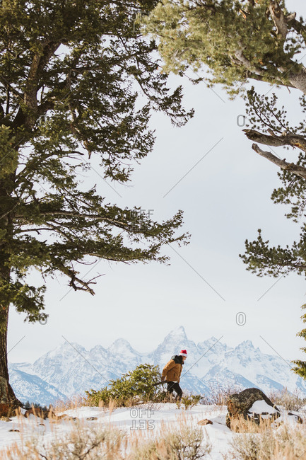 Young man drags christmas tree with Tetons in background
