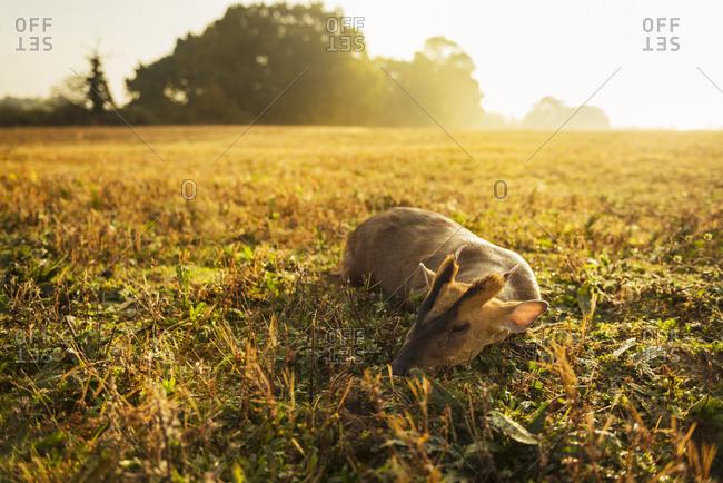 Dead deer in meadow