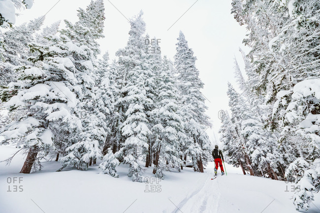 Skier with red pants heads through a break in the snowy trees