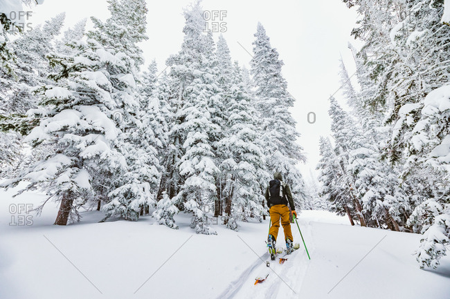 Skier heads into the woods on a backcountry adventure in Wyoming
