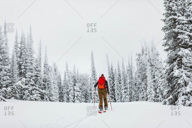 Solo female skier skins off into the trees during a snowy winter day