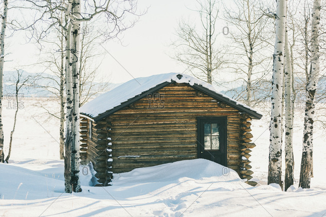 Wyoming - January 13, 2019: Historic snow covered log cabin nestled in aspen trees