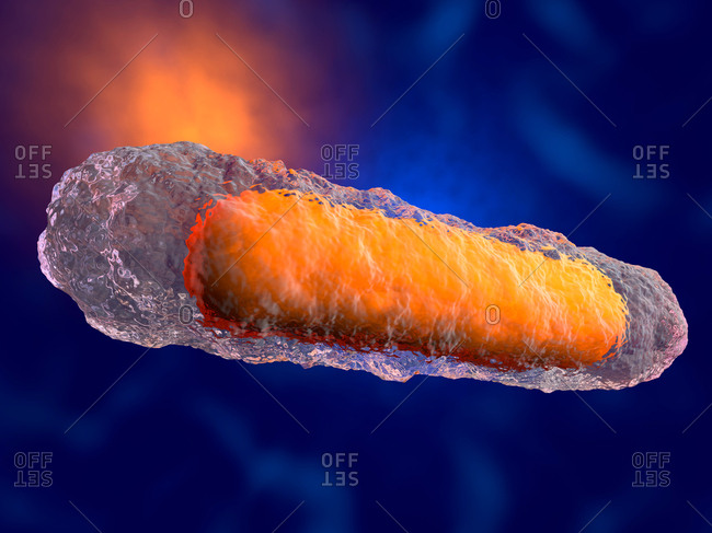 3D rendered illustration of a generic bacteria