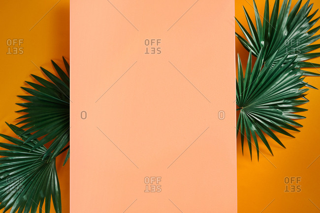 Composition Of Green Leaves With A Blank Paper. Summer Frame Concept. Flat lay.