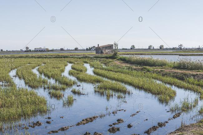 Spain- Ebro Delta- view to rice paddies