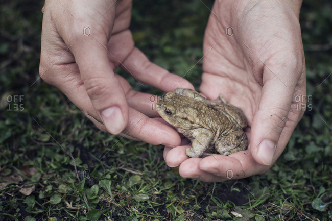 Close-up of woman holding European toad in hand