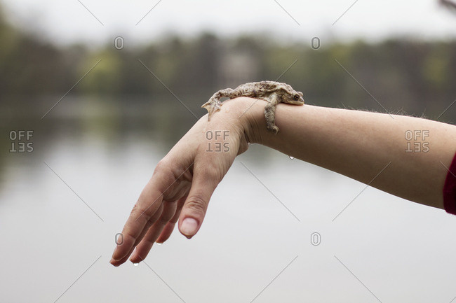 Close-up of European toad on woman's arm