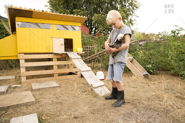 Boy holding Polish chicken at chicken house in garden