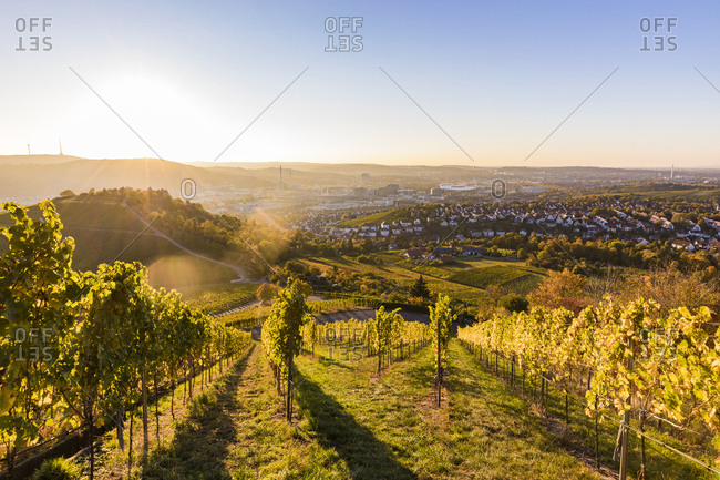 Germany- Baden-Wuerttemberg- Stuttgart- view over grapevines to Untertuerkheim and Bad Cannstatt against the sun