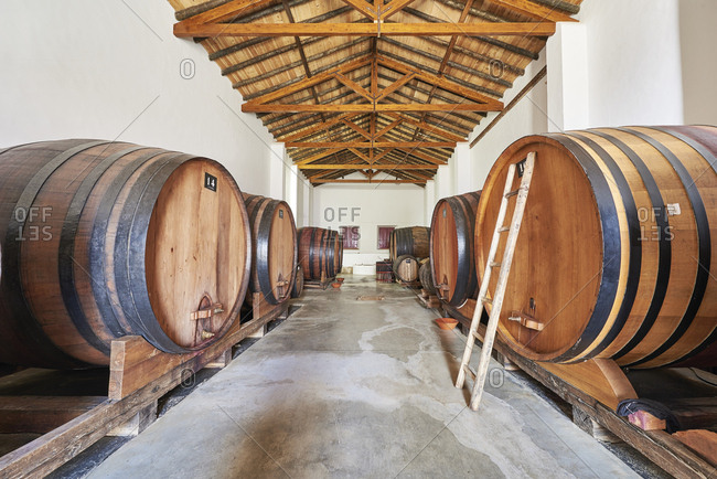 Wine cellar with aging barrels in Portugal