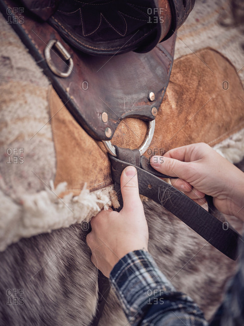 Hands of anonymous equestrian fastening straps of leather saddle on back of dapple gray horse on ranch
