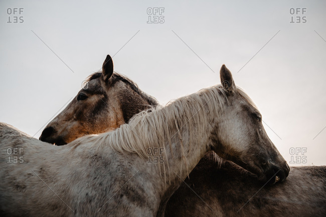 Funny horses on meadow