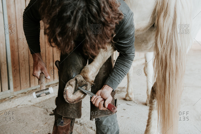 Side view of adult blacksmith using hammer to put horseshoe on hoof of horse near stable on ranch