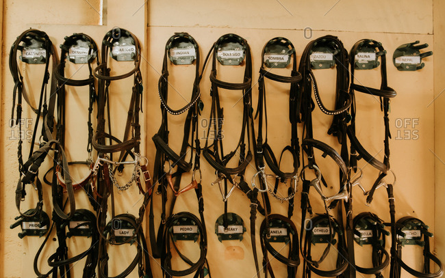 Set of leather horse bridles hanging on wall in stable on ranch