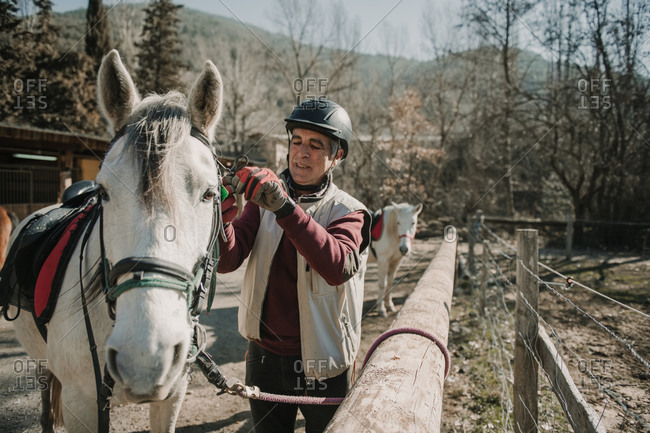Senior male in helmet putting bridle on white horse during horseback riding lesson on autumn day on ranch