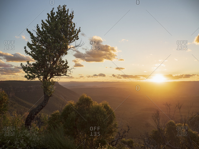 Tree on mountain at sunset in Blue Mountains National Park, Australia