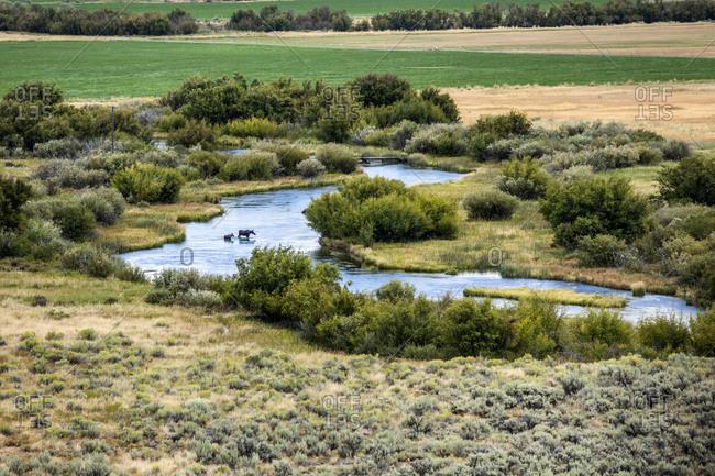 River through field in Picabo, Idaho, USA