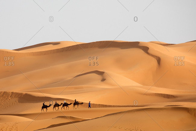 Tuareg nomad man leading camel train of tourists, Erg Chebbi Dunes, Merzouga, Morocco