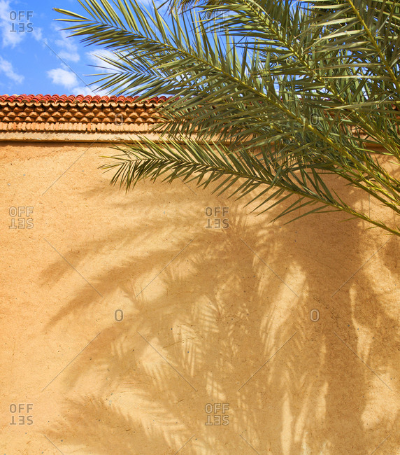 Hotel wall and date palm tree with shadows, Erfoud, Morocco