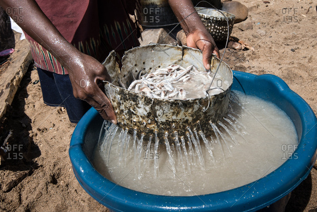 Fisherman straining water from fresh caught fish in Malawi, Africa