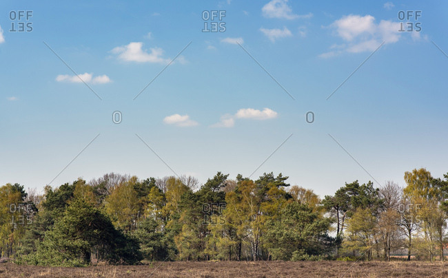 Cloudy blue sky over forest and field in early spring