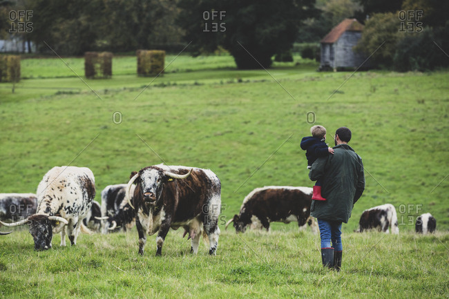 Man carrying young boy standing on a pasture, with English Longhorn cows in the background.
