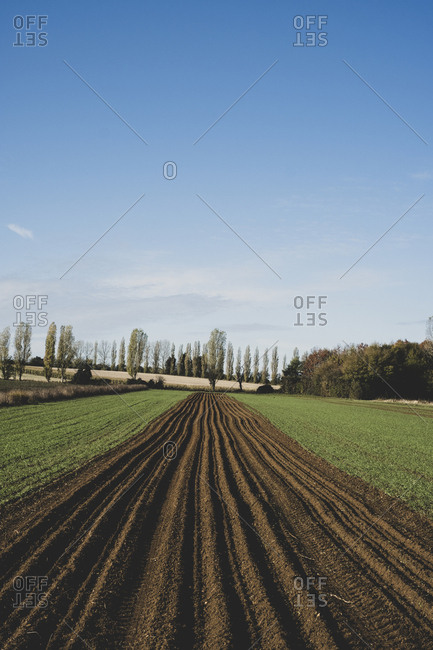 View along a freshly ploughed field, poplars and woodland in background.