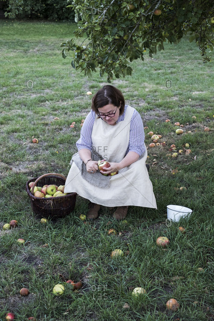 Woman sitting in an orchard under apple tree next to brown wicker basket with freshly picked apples, peeling an apple.