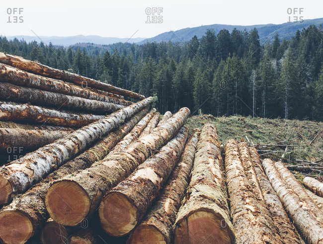 Stacked logs, freshly logged spruce and fir in the Pacific Northwest, forest in distance.