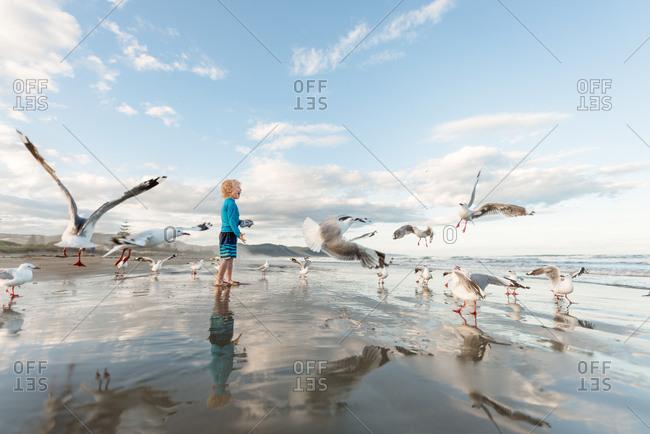 Excited little boy feeding seagulls on ocean shore