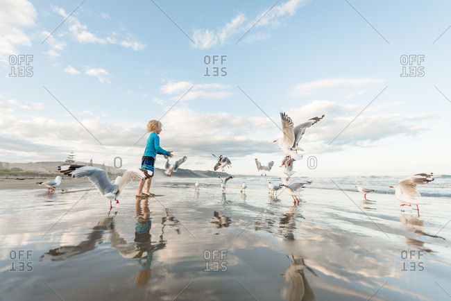 Little boy feeding seagulls on ocean shore