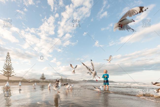 Excited boy feeding seagulls on ocean shore