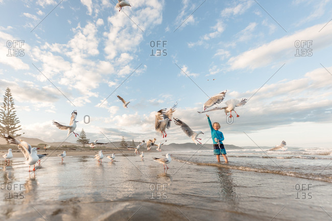 Little boy tossing food to seagulls on ocean shore