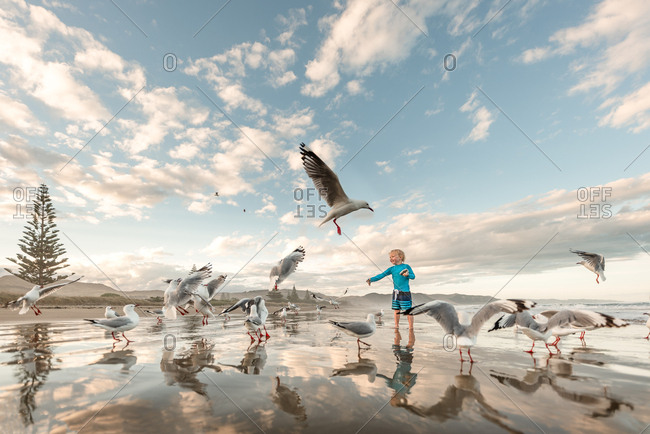 Little boy throwing food to seagulls on ocean shore