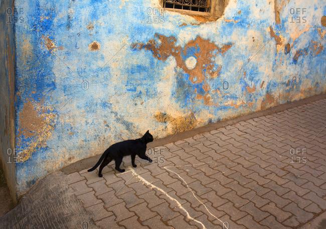 Black cat walking on backstreets in Fes, Morocco