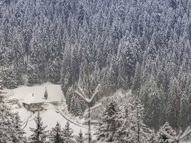 """Snowy forest with wooden farmhouse """"Fernhausle"""" in the Black Forest, Baden-Wurttemberg, Germany"""