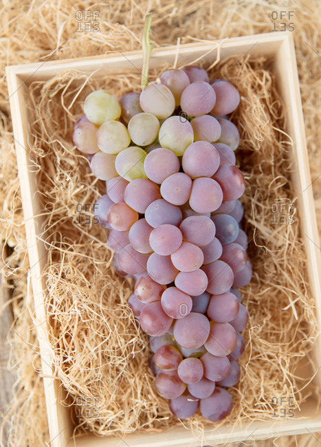 Bunch of grapes in a crate filled with straw